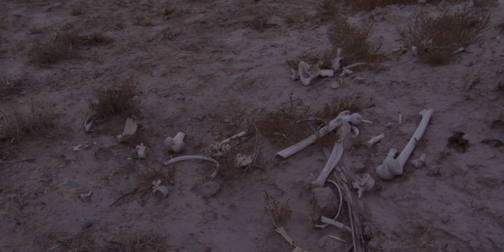 """A still image from the 2018 documentary """"Dead Souls"""", featuring a cluster of bones scattered on the ground"""